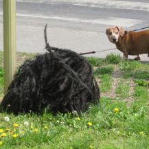 Ist_das_etwa_auch_ein_Hund