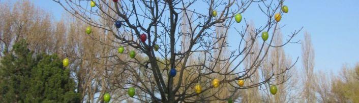 Eierbaum von Wien im 21.Bezirk