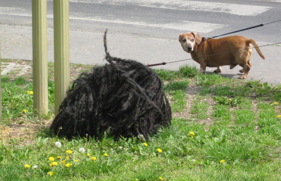 Ist das etwa auch ein Hund?
